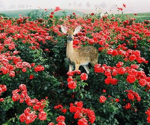 flowers, nature, and animal image