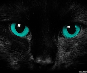 cat, eyes, and black image