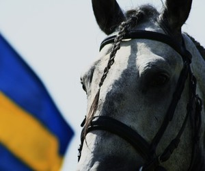 flag, girl, and horse image
