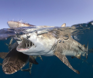 ocean and sharks image