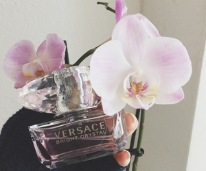 orchid and Versace image