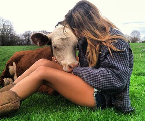 country, cow, and girl image