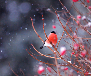 bird, snow, and tree image