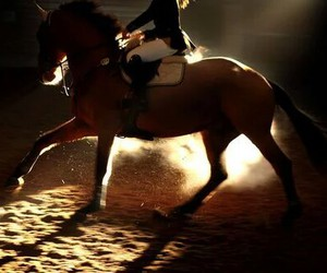 dressage, horse, and shadow image