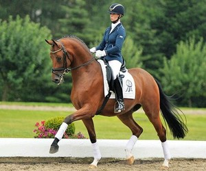 horse and dressage image