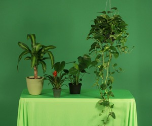 green, plants, and flowers image