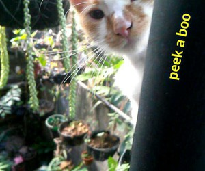 male, nature, and cat image