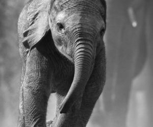 baby, elephant, and cute image