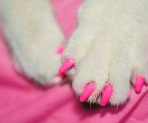 pink, animal, and cat image