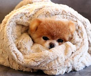animals, blanket, and cozy image