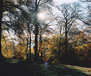 forest and sun image