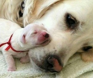awww, pup, and doggy image