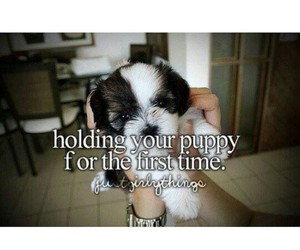 puppy and just girly things image