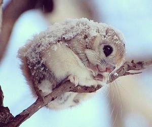 cute, animal, and snow image