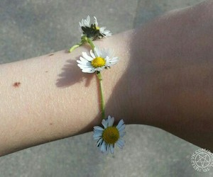 flowers, pale, and indie image