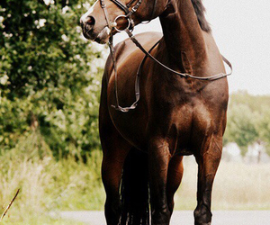 horse and beautiful image