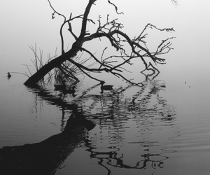 tree, black and white, and lake image
