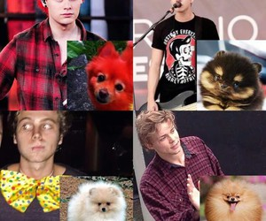 puppy, luke hemmings, and 5 seconds of summer image