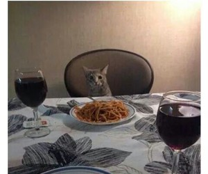 cat, funny, and date image