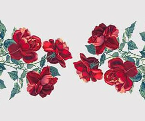 flowers, rose, and red image