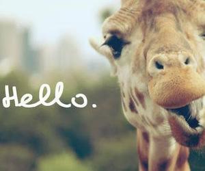 hello, giraffe, and animal image