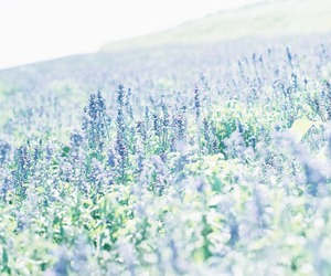 flowers, lilac, and meadow image