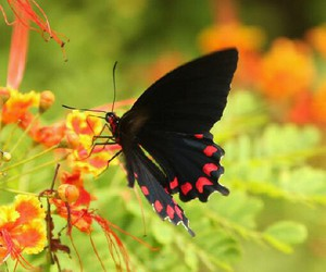 beutiful, nature, and butterfly image