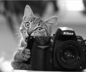 cat, camera, and nikon image