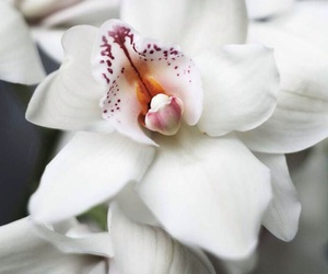 flowers, orchid, and nature image
