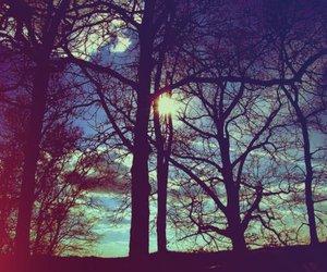 tree, sun, and sky image