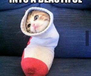 :), cuts, and funny animals image
