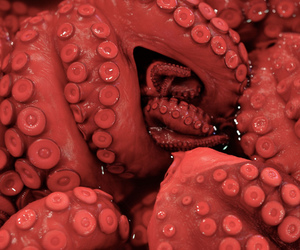 octopus, red, and aesthetic image
