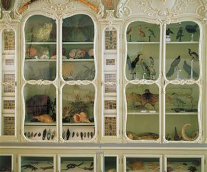 collection, taxidermy, and rococo image