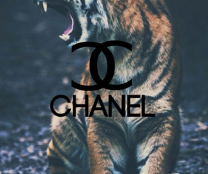 chanel, fashion, and wallpaper image