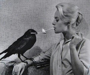 cigarette, black and white, and bird image