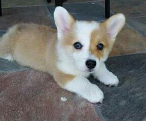 puppy, cute, and animal image