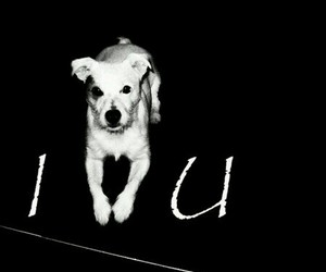 dogs, heart, and I Love You image