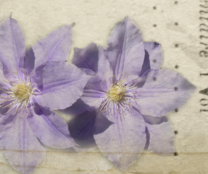 clematis, textures, and magicunicornmasterpiece image