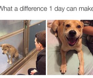dog, pet, and adoptdontbuy image