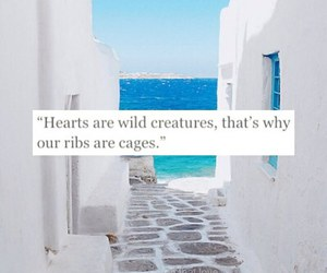 heart, quote, and ribs image