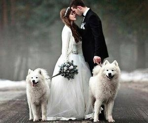 bride and groom, couples, and kissing image