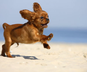 adorable, beach, and run image