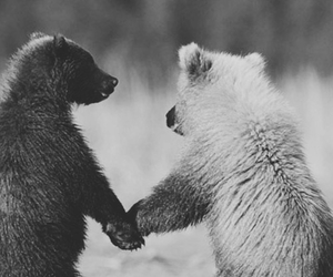 bear, love, and animal image