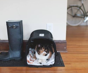 cat, rain boots, and home image