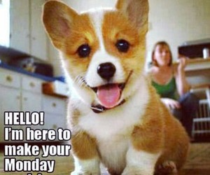 happy, monday, and puppy image