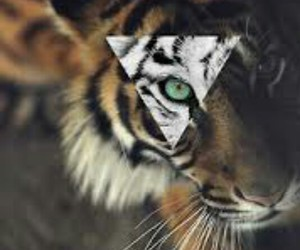 animal, hipster, and tiger image