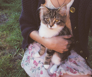 cat, vintage, and animal image