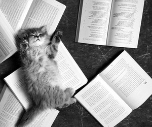 book, cat, and cute image