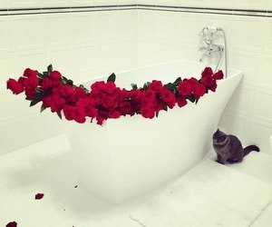 animal, cat, and roses image
