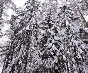 february, forest, and nature image